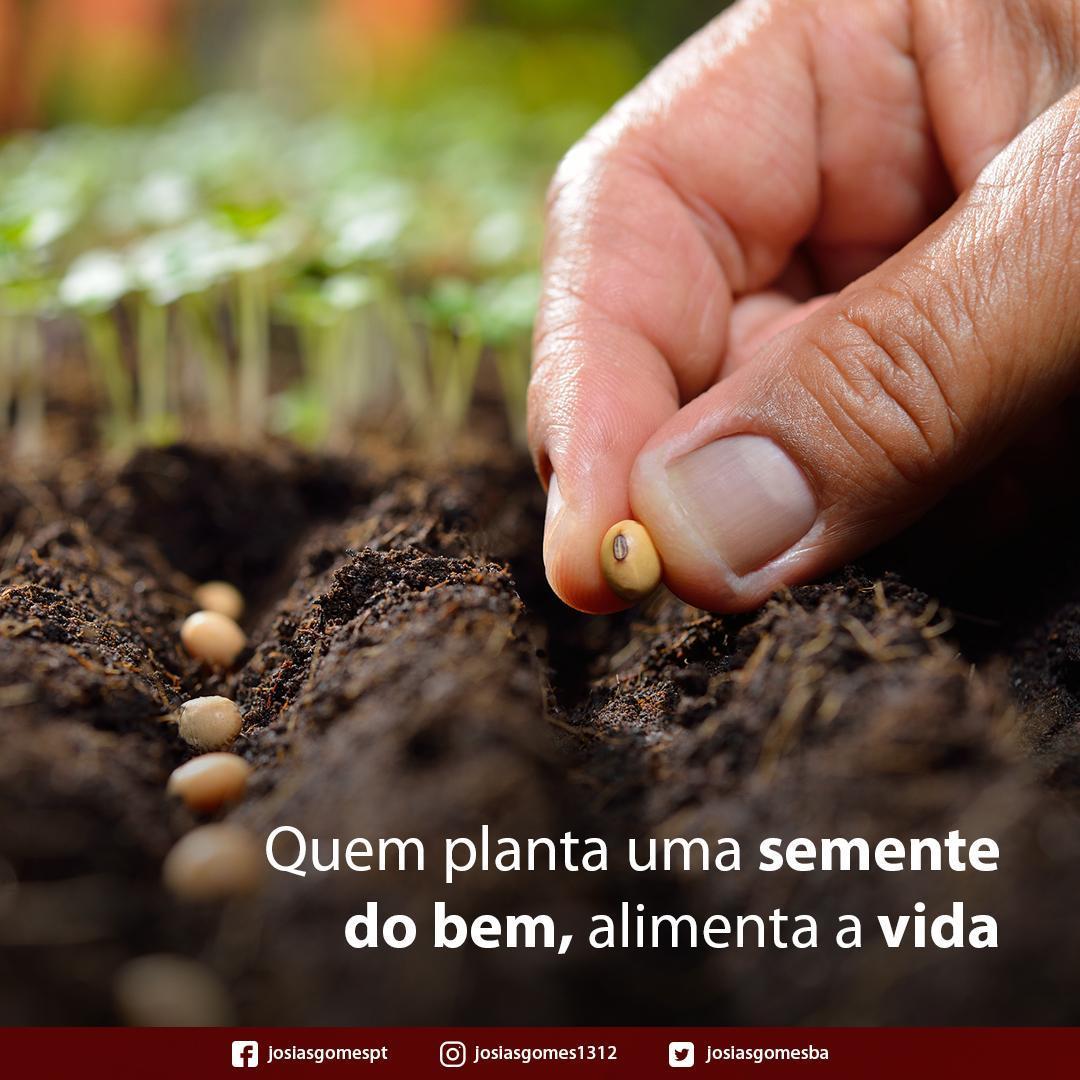 Plantando Sementes Do Bem!